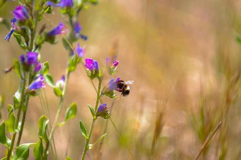 Nathan Antoun, 12 - Bee, Highly Commended, 11-15. Photo: Nathan Antoun
