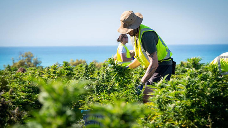 Harvest has begun at Winterhome. Photo: Pip O'Regan