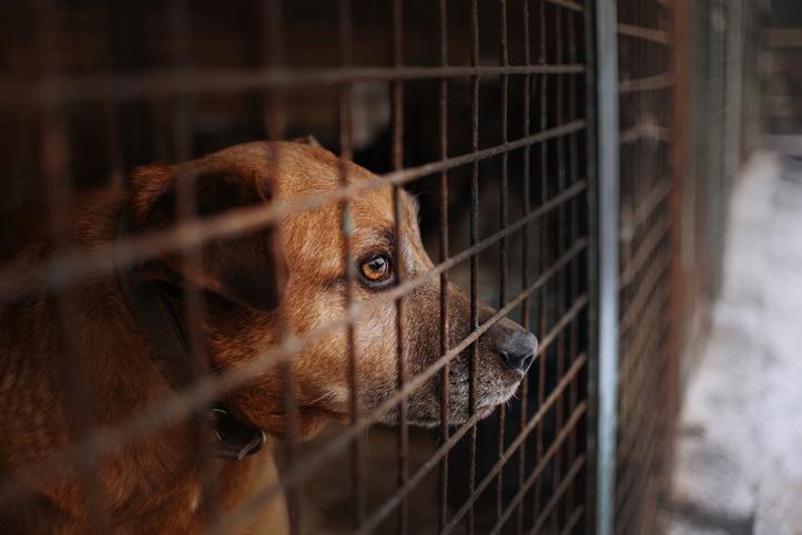 Dog in pound. Stock photo: Getty