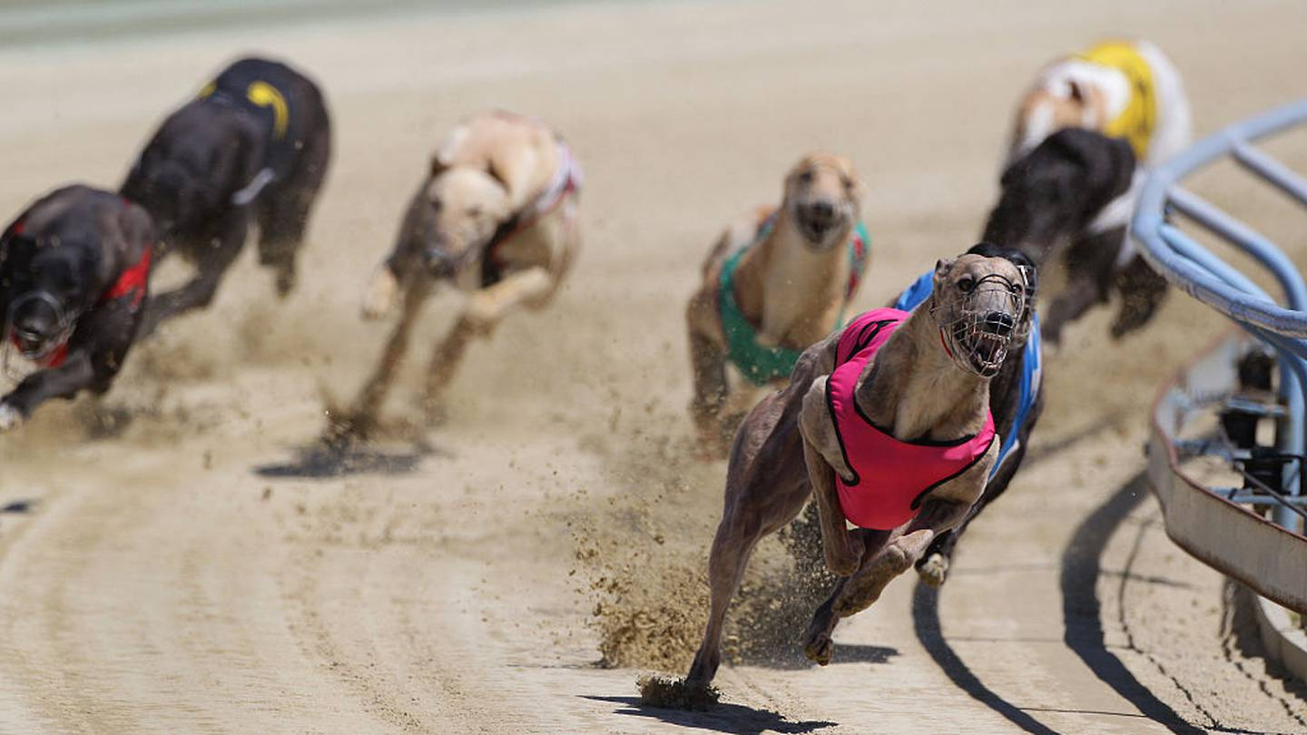 Urine samples revealed methamphetamine and amphetamine in the dog's system. Photo: Getty Images /...