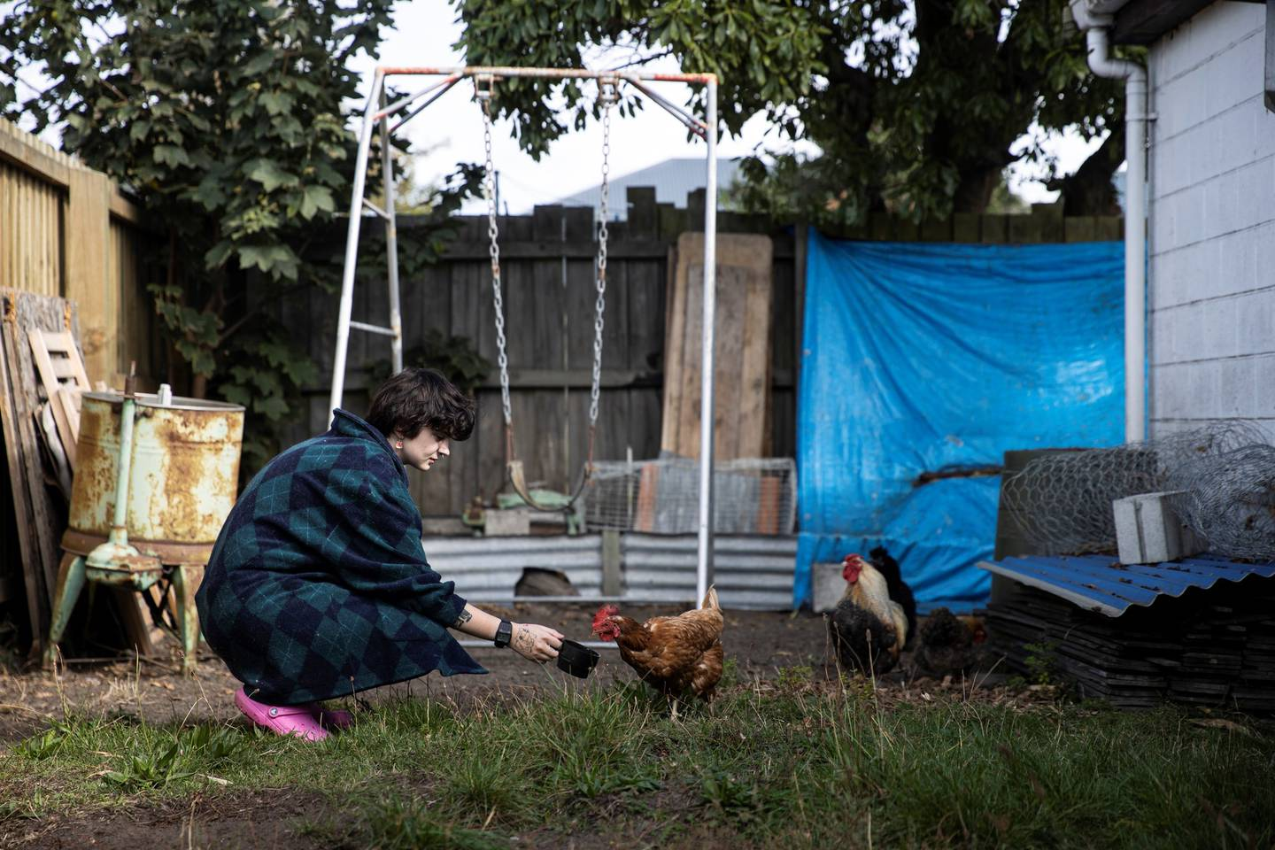 A complaint has been laid over the rooster's crowing at a residential North Beach property in...