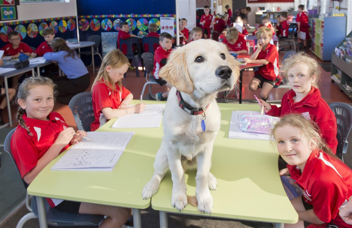 Gus, the dog, with Fairfield School pupils (clockwise, from front left) Luna Mirriellees, Myah...