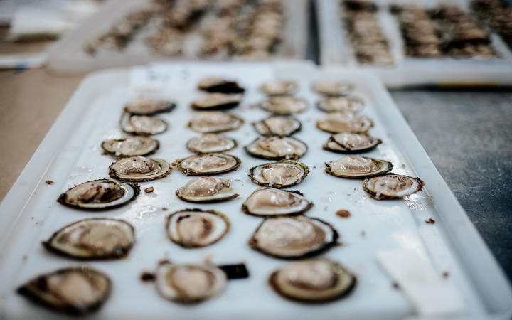 NIWA has been testing more than 2000 oysters, taken from 15 sites on the Strait, to better...