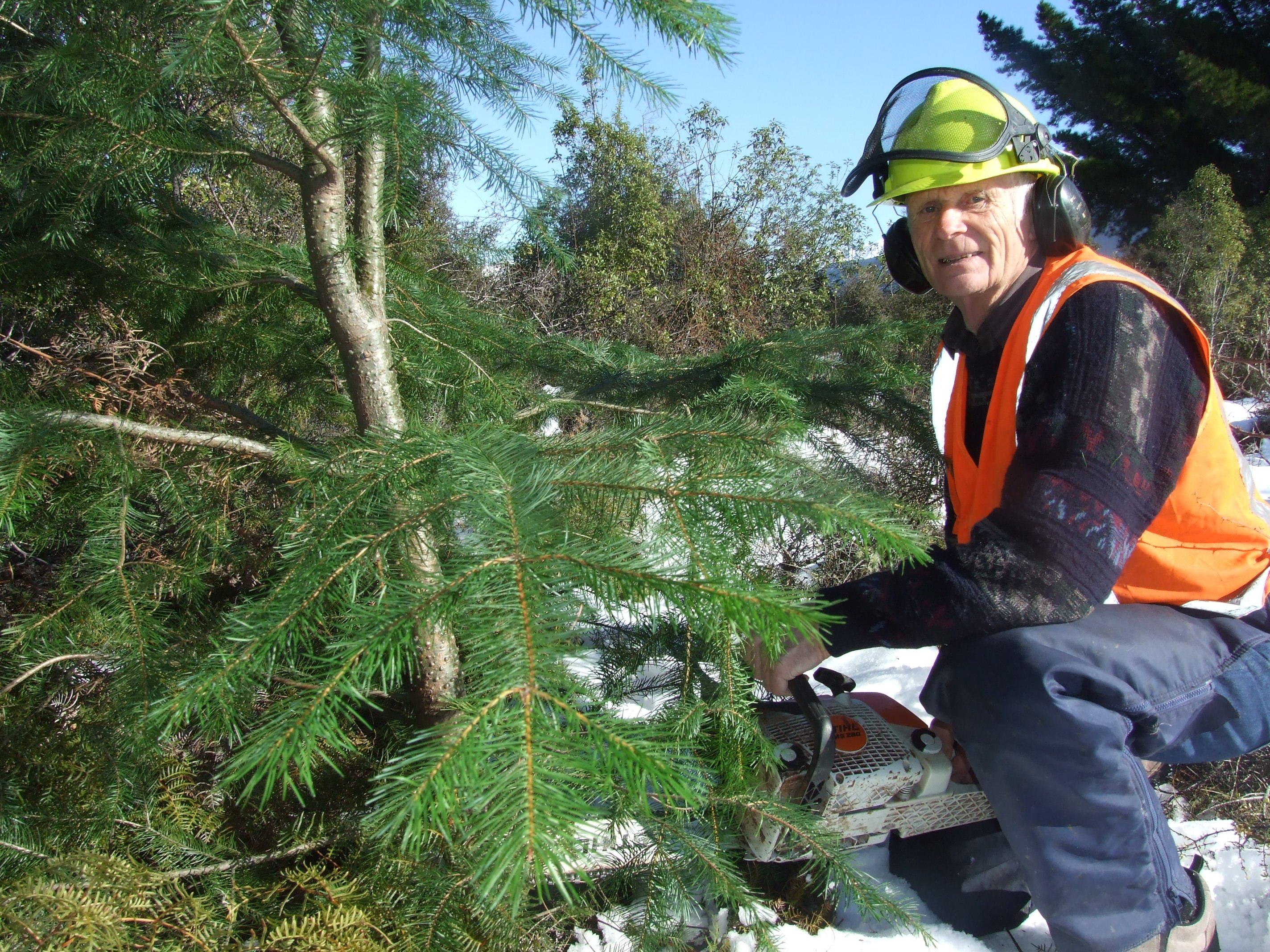 Wilding pines activist Peter Willsman.