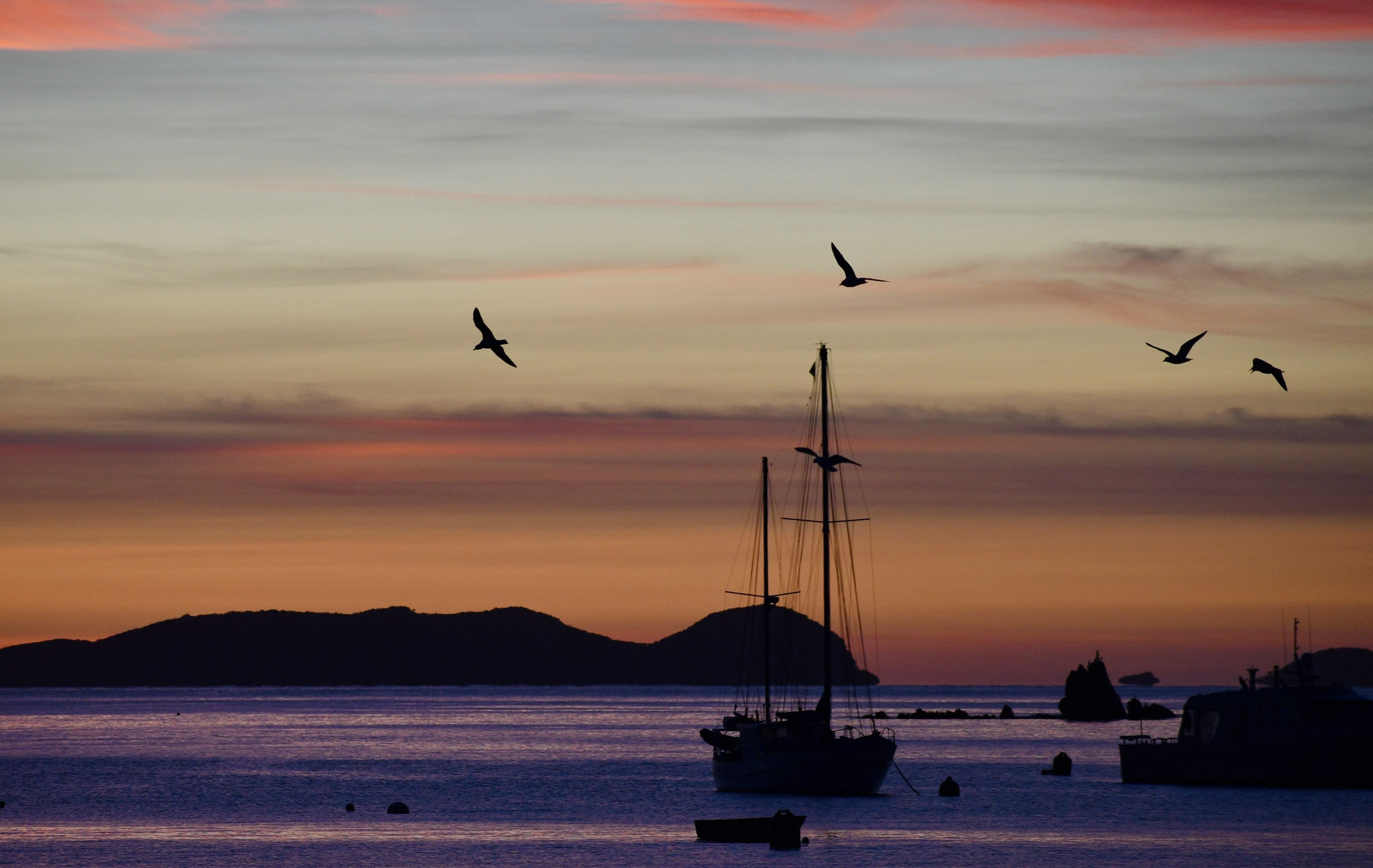 Stewart Island is home to a variety of birdlife.