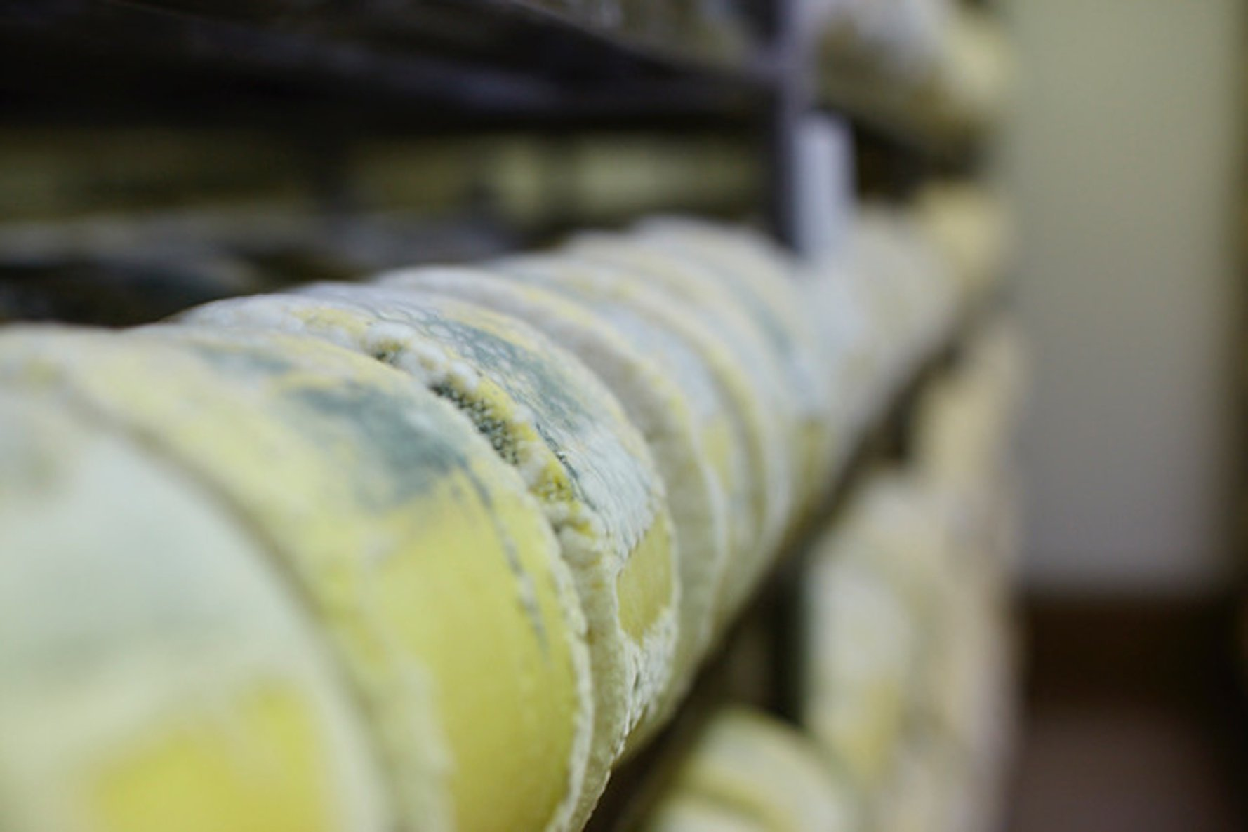 Blue cheeses maturing at the Whitestone Cheese factory in Oamaru.