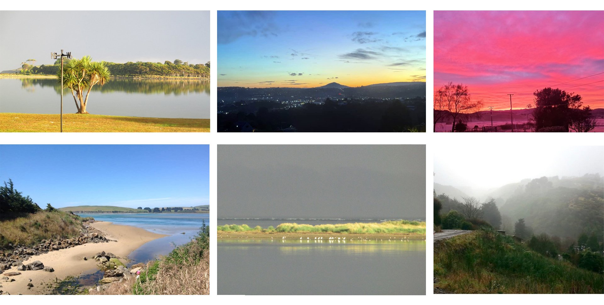 Some of the photos of backyards submitted as part of the Earthlore Photo Exhibition.