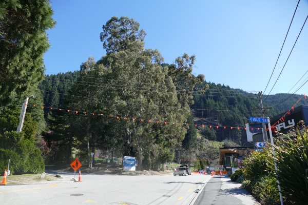 One of the eucalyptus trees, centre, earmarked for removal by the Queenstown Lakes District...