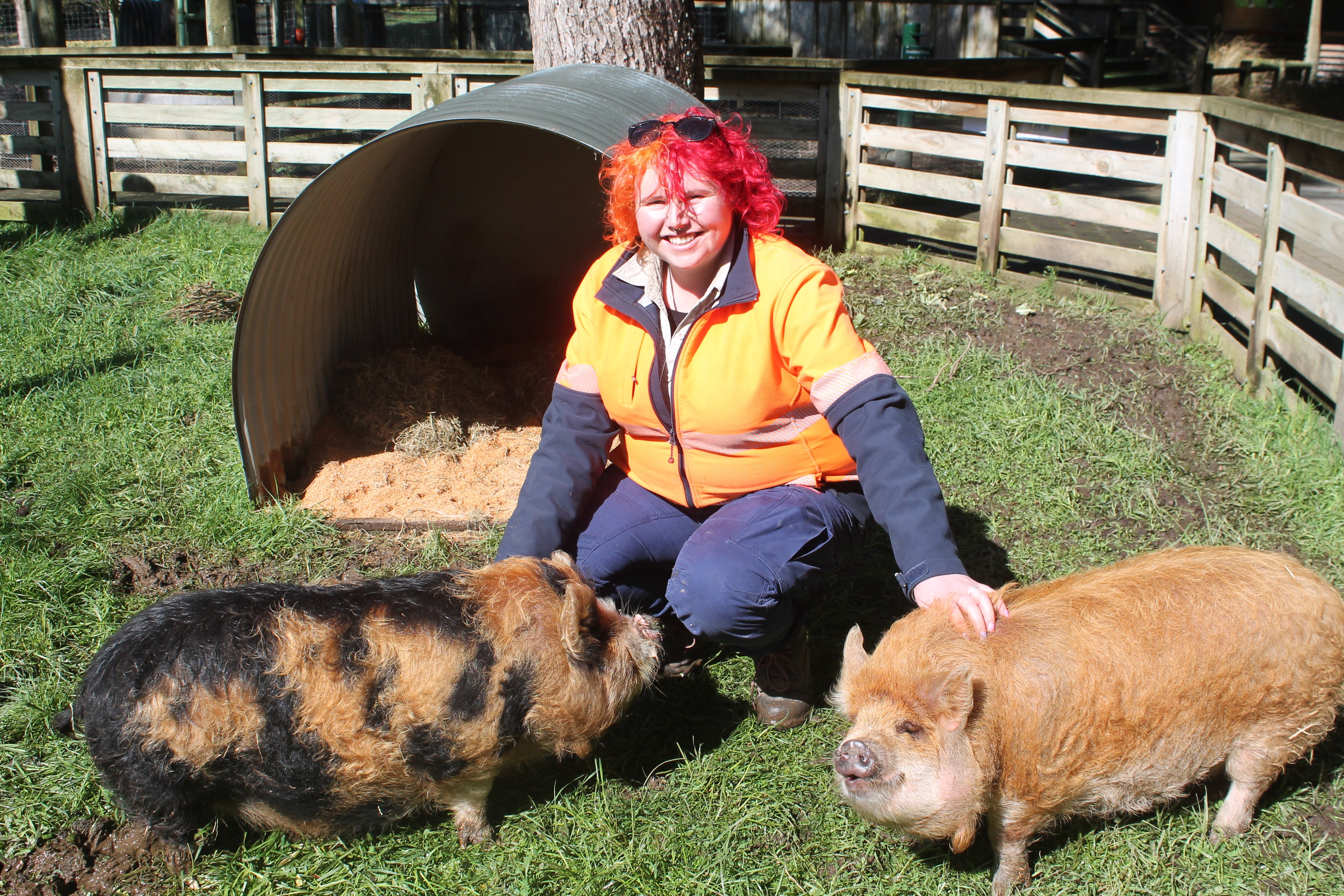 Pigs are sociable animals and like to have friends, so it is great to have the new additions to...