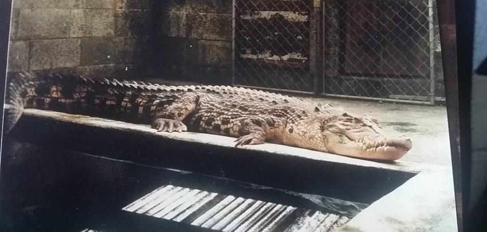 This photo of 'Charlie' the crocodile was shared on the Christchurch North New Brighton Mini Zoo ...