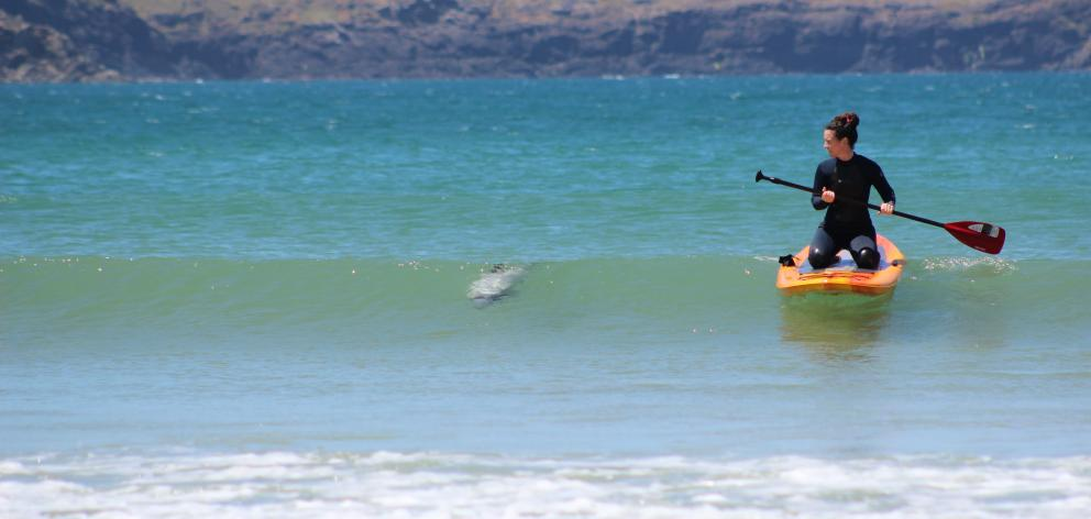 A dolphin swims with June Beange, of Gisborne. Photo: Alec Beange