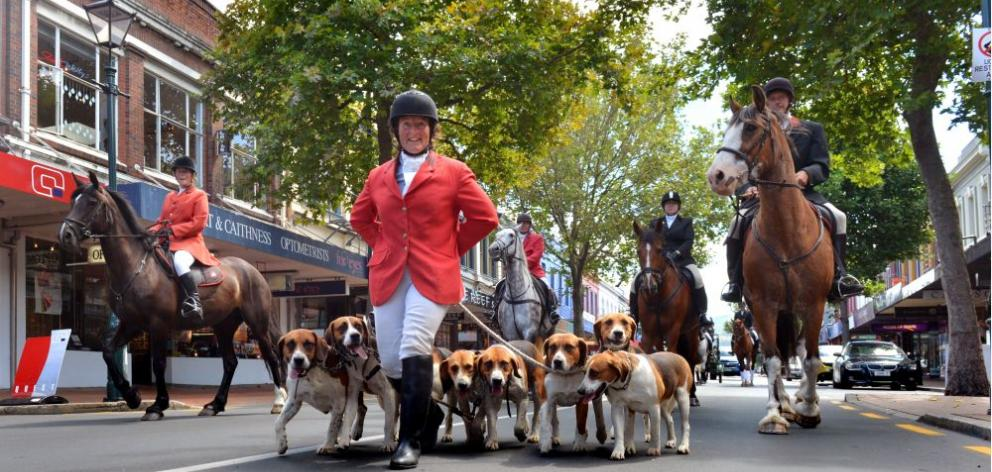 Otago Hunt member Anne Beattie leads her harrier hounds up George St, Dunedin, flanked and followed by equestrian riders as part of the Ride the Rhythm street parade to the Octagon yesterday. Photo by Gerard O'Brien.