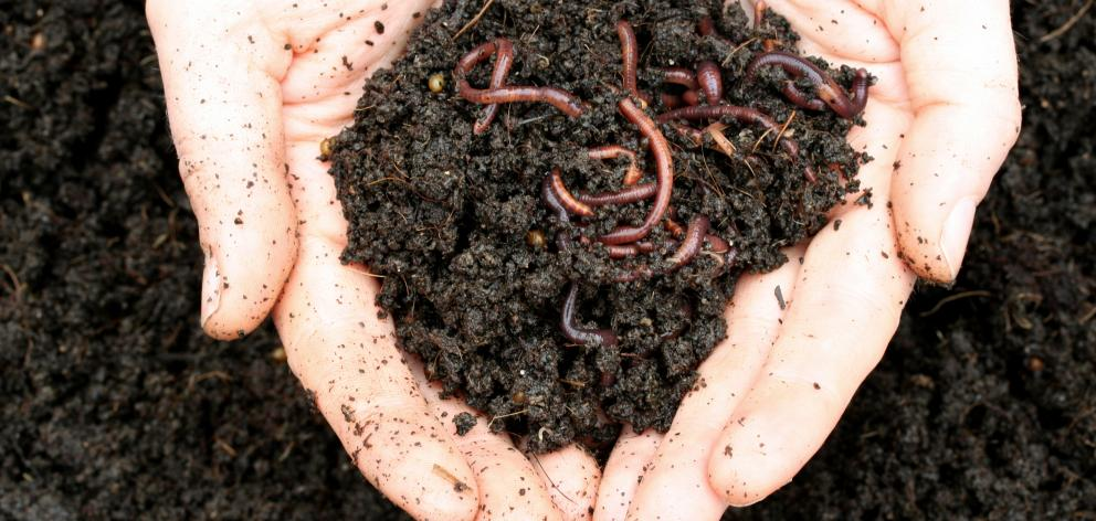 Worms slow right down when the temperature drops below 10degC. Photo: Getty Images