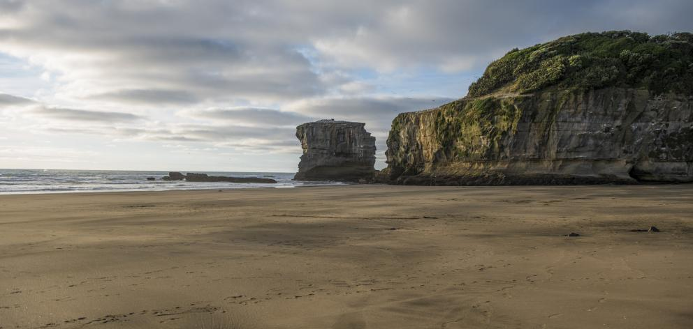 Muriwai Beach in Auckland. Photo: Getty Images