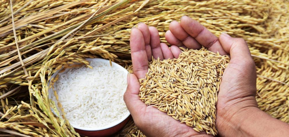 Beneficial carbohydrates are minimally refined grains. Photo: Getty Images