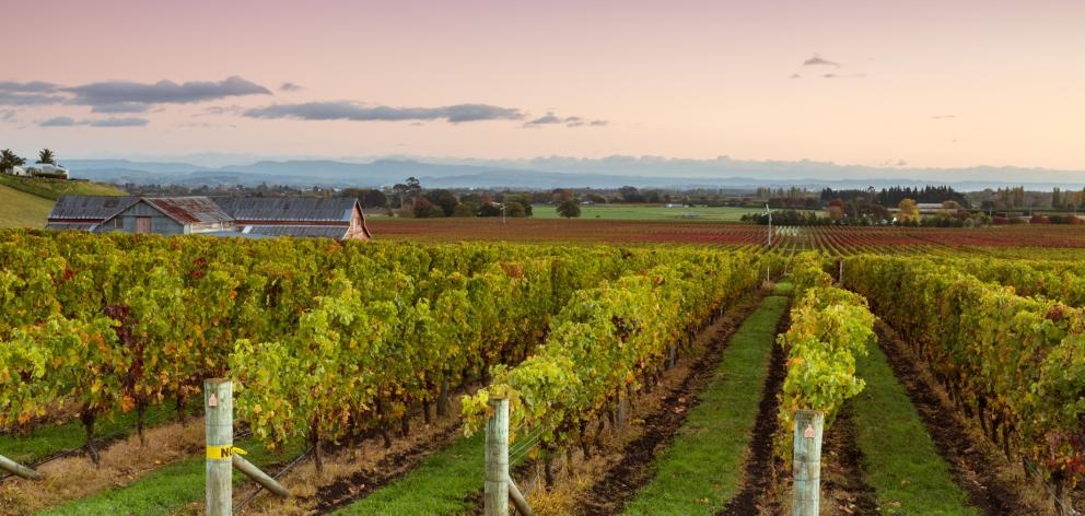 Gisborne/Hawkes Bay is described as the country's most bullish region. Photo: Getty Images