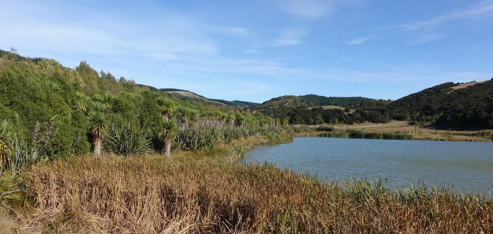 Kae Pond in the Tiromoana Bush. Photo: David Norton