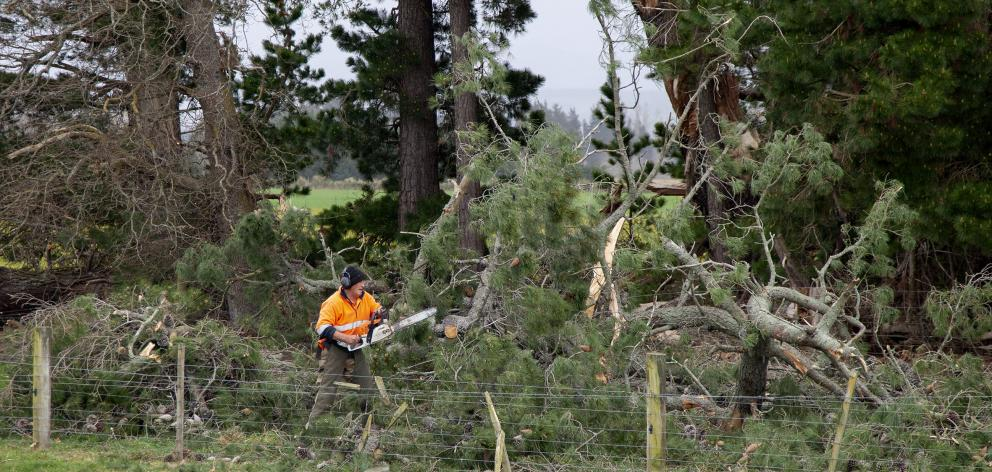 Clearing the fallen trees on Milnes Rd, Hororata. Photo: Geoff Sloan