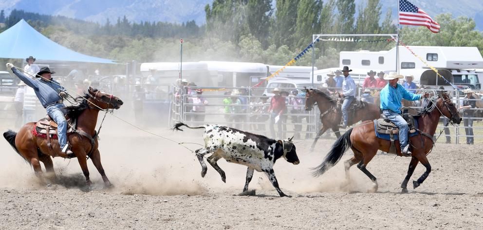 Michael Sanderson, of Middlemarch, lands his lope around the steer's legs as he and Mark Stewart, of Balclutha, win the open team roping.