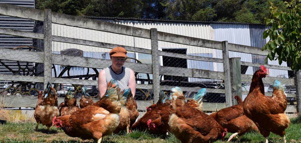 Pauline Rietveld, of Saddle Hill, feeds her flock of chickens. PHOTO: SHAWN MCAVINUE
