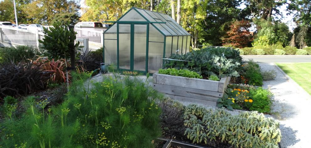 The compact herb and vegetable garden at Mercy Hospital contributes to its local food sources. Photo: Brenda Harwood