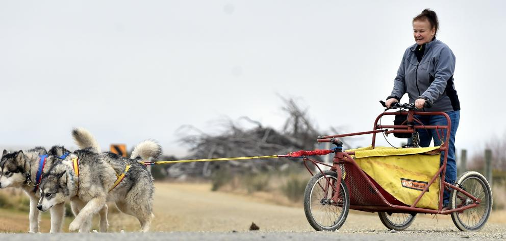 Rose Voice, of  Ranfurly, gets in some practice for the long-distance sled race with Alaskan...