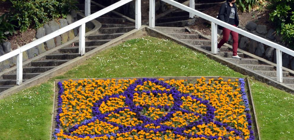 Image result for dunedin flowers stairs albany street