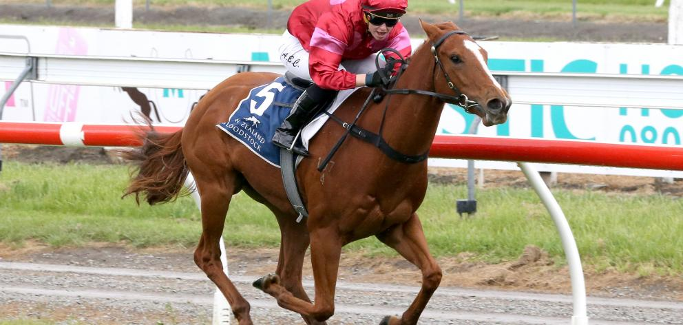 Prom Queen, ridden by Alysha Collett, wins the Welcome Stakes at Riccarton on Saturday. Photo:...