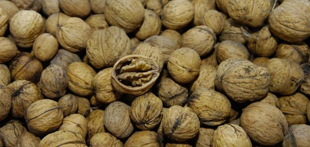 Walnuts contain both omega-3 and omega-6. Photo from ODT files.