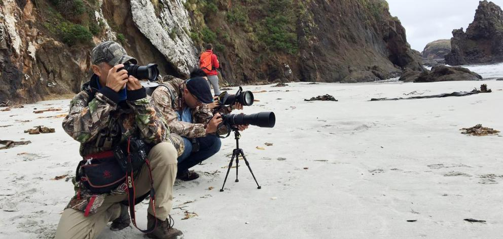National Geographic  wildlife photographer Xi Zhinong (front) at Allans Beach with his assistant...