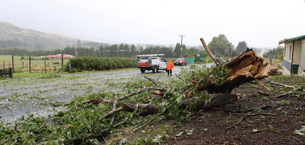 A fallen tree is cleared off the road south of Roxburgh. Photo: Jono Edwards