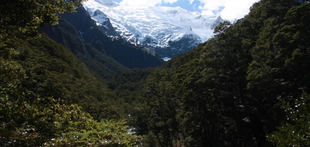 The Rob Roy Glacier seen from the lower lookout on the Rob Roy Glacier track in October. The...