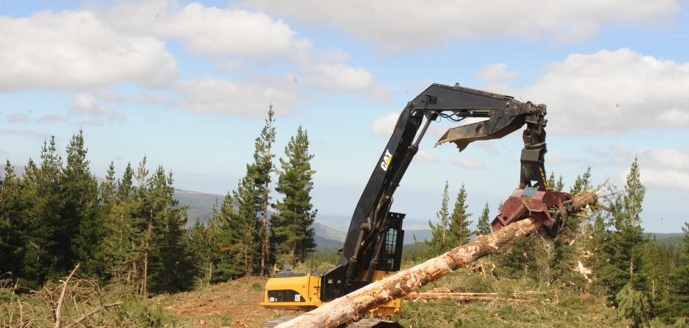 There has been a low level of new tree planting in recent years despite good returns. Photo:...