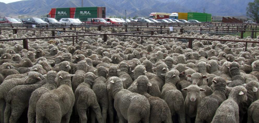 New Zealand is working to position its beef and lamb as a premium food choice. Photo: ODT.