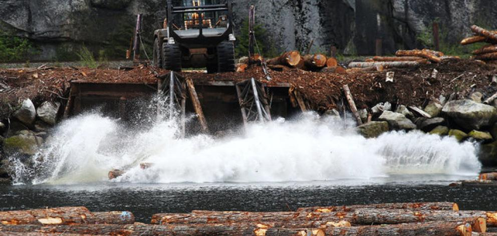 Logs are pushed into the water at Squamish Mills Ltd in Howe Sound near Squamish. Photo: Reuters