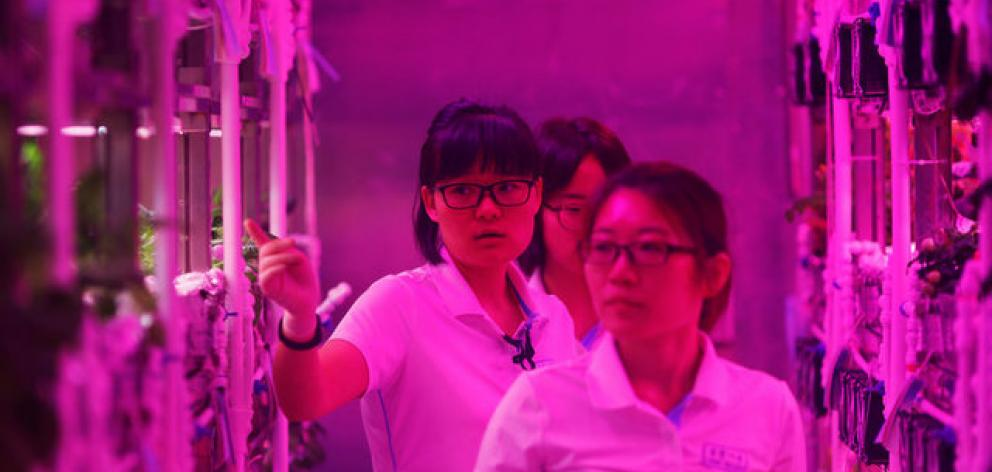 Four students from Beijing University of Aeronautics and Astronautics entered the Lunar Palace-1 with the aim of living self-sufficiently for 200 days. Photo: Reuters
