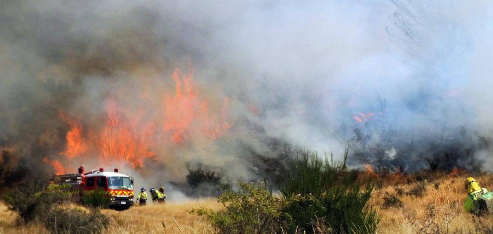 Pine trees and grass burn on the Dublin Bay lake reserve in March this year. Photo: Kerrie...