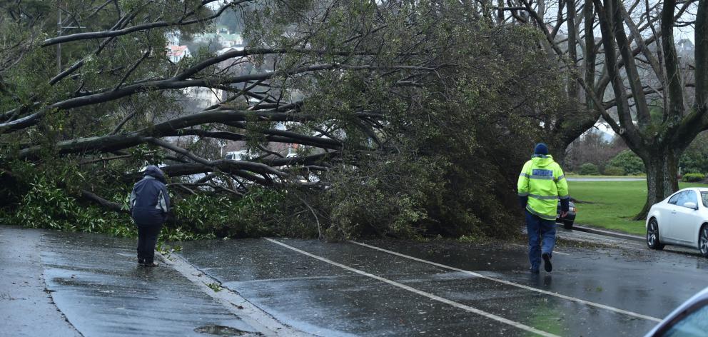A fallen tree blocks Great King St in Dunedin. Photo: Gregor Richardson