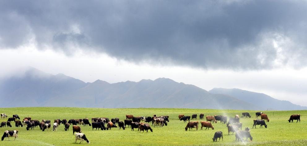 Paddocks in previously drought-prone North Otago transformed by irrigation. Photo: Stephen Jaquiery.
