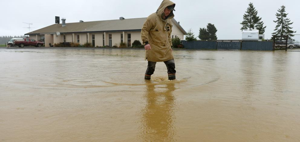 North Taieri resident Harley Quinn walks in floodwater across Saunders Rd outside North Taieri...