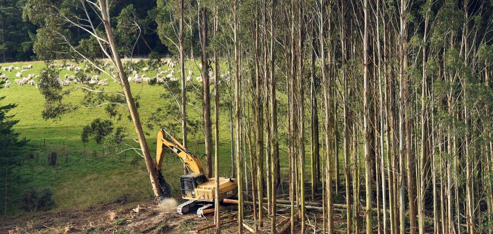 Forest sector groups want more replacement planting undertaken and increased use of timber for...