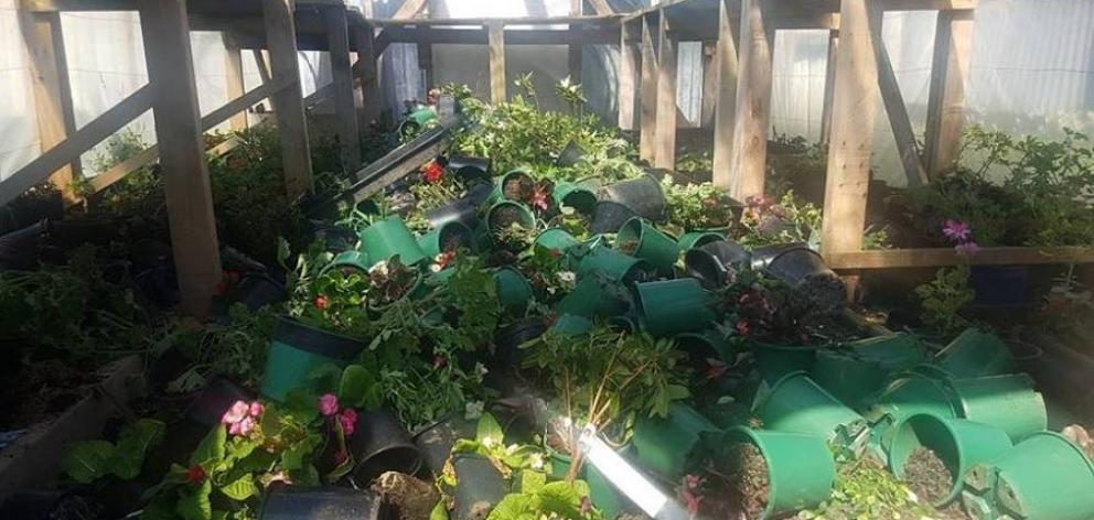 Most Of Khaled Al Jouja S Plants Were Ruined When Vandals Smashed The Green House At His