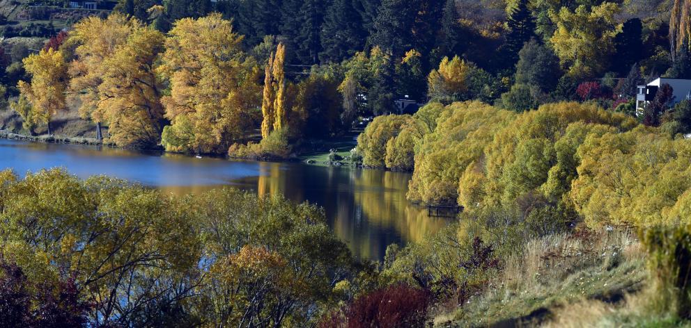 Lake Hayes' shoreline begins to turn gold last week. Photo: Craig Baxter.