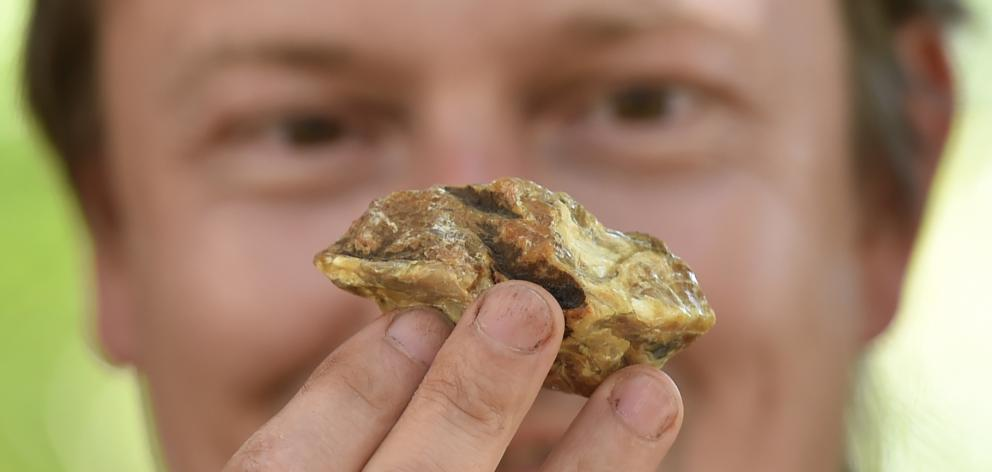 University of Otago researcher Dr Uwe Kaulfuss holds a block of amber from a Southland coal mine...