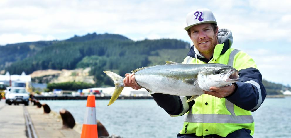 Blair Martinac holds a kingfish he caught yesterday at a Dunedin wharf set to be closed to fishermen. Photo: Peter McIntosh
