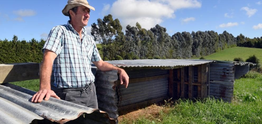 Empty pens . . . Kerry Dwyer stands beside some of his empty calf-rearing sheds on his Maheno...