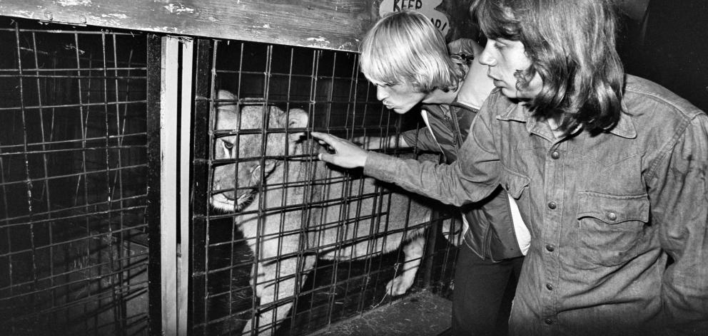 Young lioness Suzy is soothed by lion tamer Anton Prosk  (left) and Russell Harris after she was...