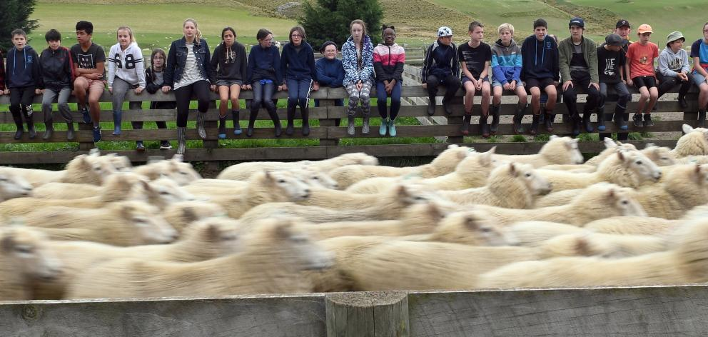 Pupils from Liberton Christian School visit Preston and Tori Hope's sheep and beef farm at Deep...