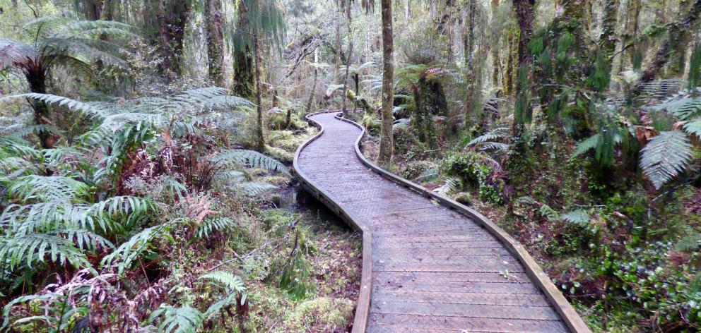 The Ship Creek walks offer an easy stroll through the sheltered forest.
