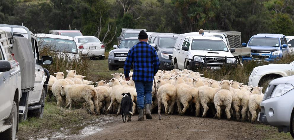A levies increase proposed in the sheep and beef sector would raise more than $4million. PHOTO:...